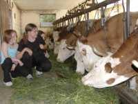 Landurlaub Schwandorf mit Natur Tiere Traktor