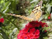 preiswerter und günstiger Urlaub in Bayern Bayerischer Wald