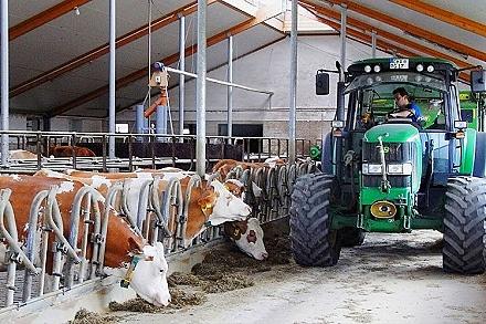 Bauernhof Bayerischer Wald Kuhstall mit Kühe