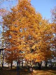 Herbst - Herbsturlaub im Bayerischen Wald