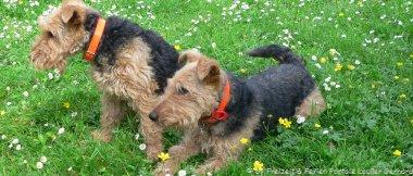 Hundehotel Urlaub mit Hund Bayerischer Wald