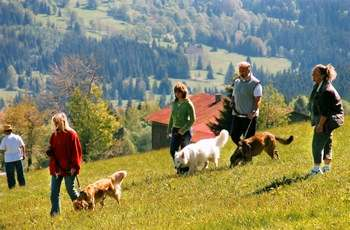 Wanderurlaub mit Hund im Bayerischen Wald