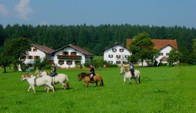 Erlebnis Bauernhof Wieshof Kirchberg Ponyreiten