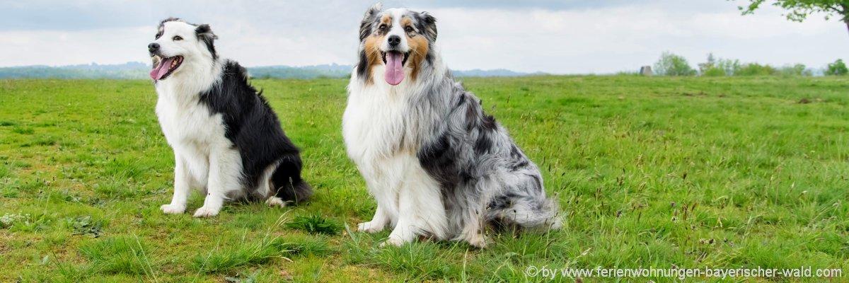 ayern-hotel-urlaub-mit-hund-bayerischer-wald-hundefreundlich