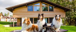 Familienurlaub und Reiturlaub mit Hund in Bayern