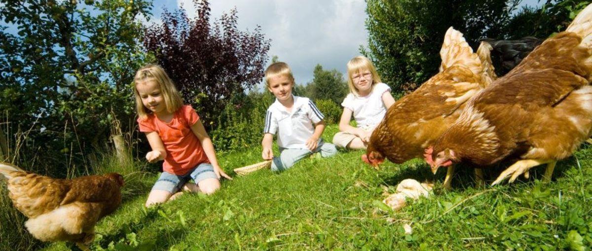 Fuchshof in Sankt Englmar Bauernhofurlaub & Familienurlaub