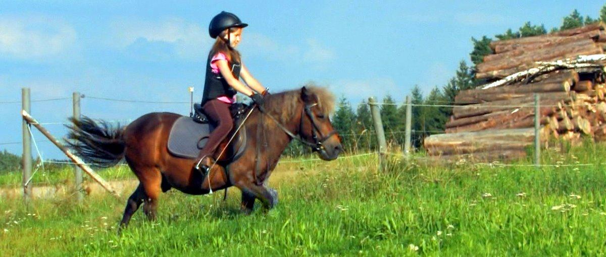 Bayerischer Wald Kinder Bauernhof mit Ponyreiten