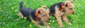 Bayerischer Wald Pension mit Hund in Bayern