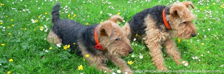 hundefreundliche-unterkunft-bayerischer-wald-pension-mit-hund-hotel-gasthof