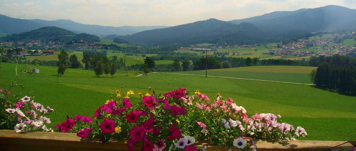 kriegerhof-arrach-bayerischer-wald-lam-bauernhof-osser-berge
