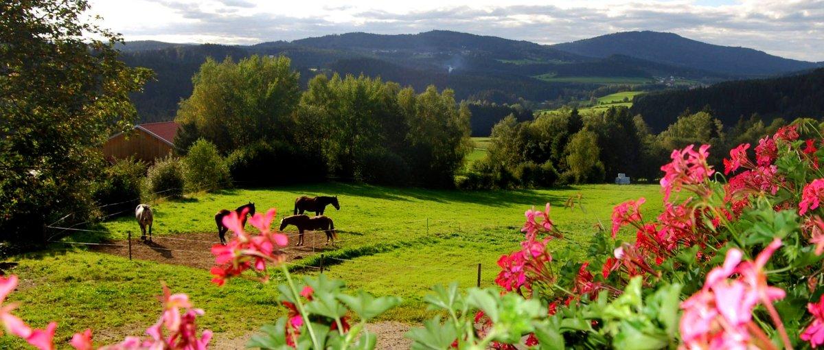 Urlaub auf dem Bauernhof Kroner in Gehmannsberg Ferienwohnungen bei Rinchnach