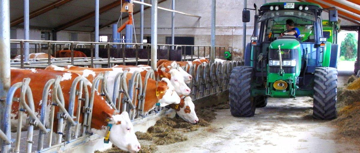 piendl-guthof-bauernhof-urlaub-michelsneukirchen-traktor-fahren-kuhstall