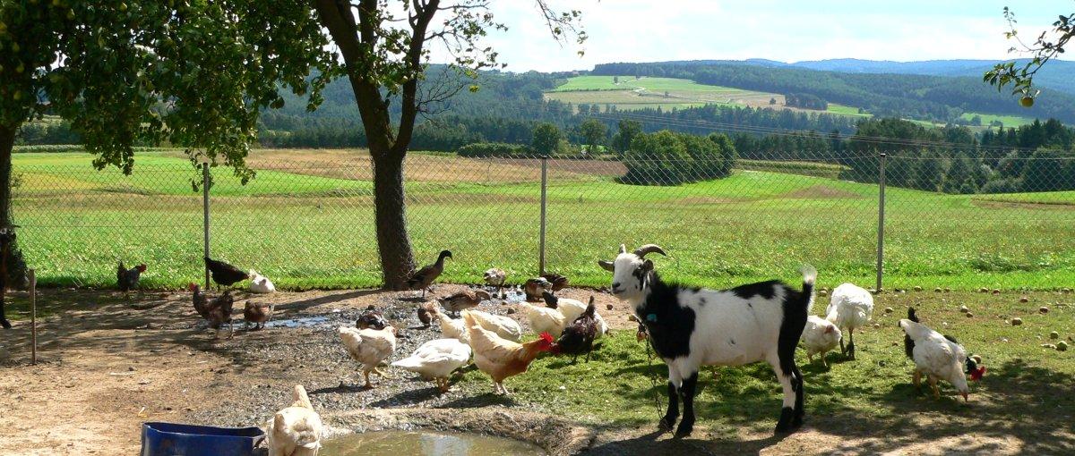 Urlaub auf dem Bauernhof in Kirchenrohrbach bei Walderbach im Regental