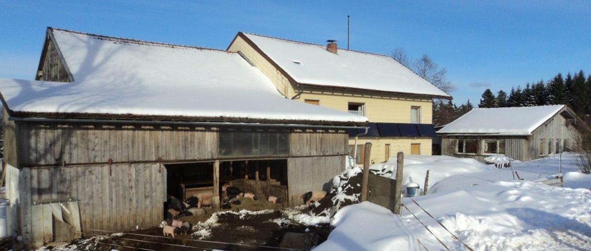 Urlaub am Bio Bauernhof Scherm Bayerischer Wald