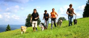 Wanderurlaub mit Hund im Hundehotel in Bayern