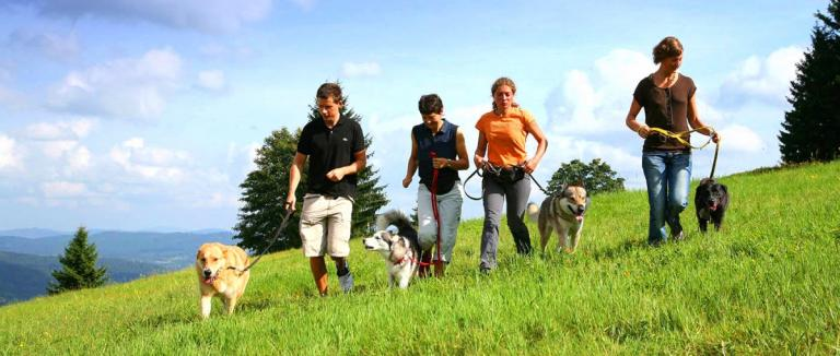 waldeck-koch-hunde-hotel-bayerischer-wald-hundetraining