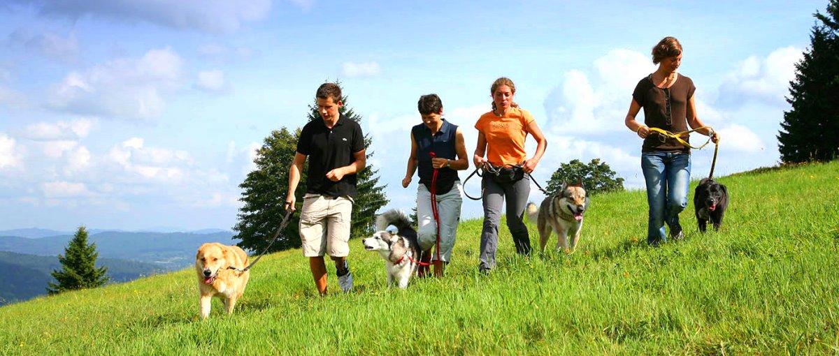 Waldeck Koch in Mitterfirmiansreut Wellness Hotel mit Hunde Seminare, Agility Training, Betreuung