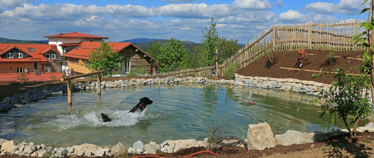 Bayerischer Wald Hundehotel mit Agility Kursen und Hundepool in Bayern