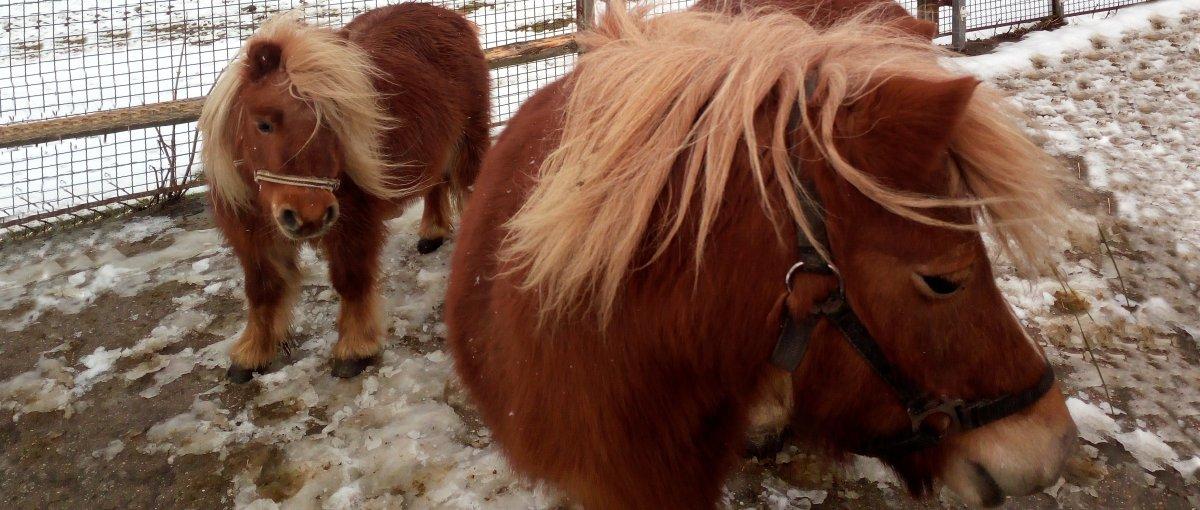 Ferienhof mit Ponys Ferienwohnung mit Streichelzoo in Bayern