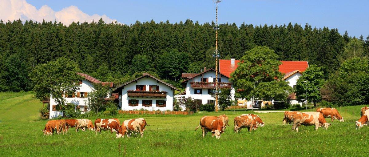 You are currently viewing Erlebnisbauernhof Wieshof in Kirchberg im Wald